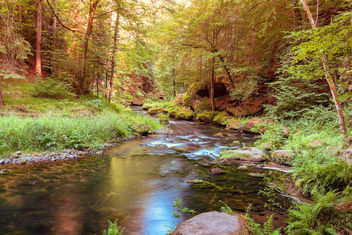 Peaceful scene of a small river - бесплатный image #455651