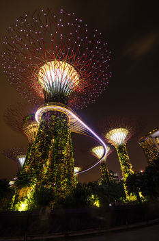 Singapore Super tree groove in Gardens by the bay - бесплатный image #455941
