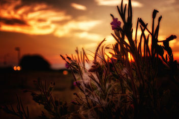 Flowers, Fluff And Sundown - бесплатный image #456181