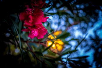 Blue Hour Flower - image #456341 gratis