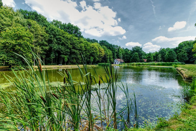 A Summer Pond - Free image #456351