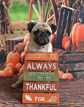 Happy Thanksgiving! - Free image #457321