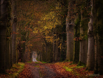Last autumn colors in the Netherlands - image #457561 gratis