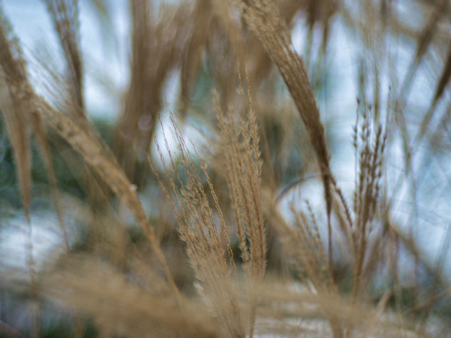 Grass in the wind - Kostenloses image #458231