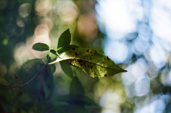 Leaf with blurred background - Kostenloses image #459501