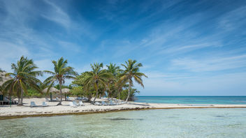 Palm Trees at Cayo Iguana - image #459761 gratis