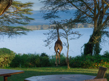 A Visitor at Breakfast, Elsamere Lodge, Naivasha - Free image #460721