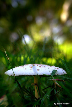 Mushroom by iezalel williams IMG_4093 - Canon EOS 700D - image #461431 gratis