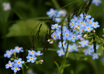 The wild meadow flowers. - image gratuit #461911