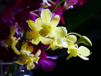 orchids - Free image #462011