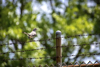 Bird on a Wire II - Free image #462251