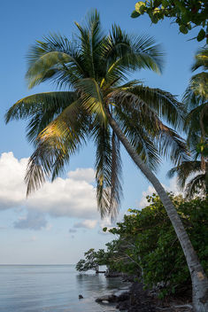 Palm Tree in Playa Larga, Cuba - бесплатный image #462521