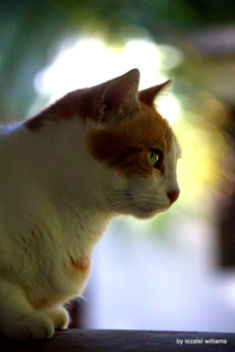Cat's profile by iezalel williams IMG_4939-003 - Kostenloses image #462921