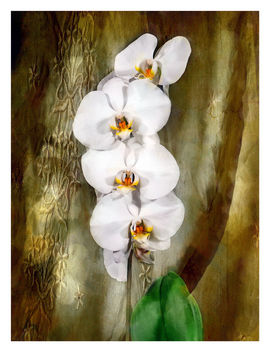 White Orchids - Free image #464011