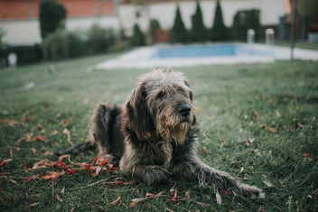 Old dog sitting outdoors in autumn - Free image #464851