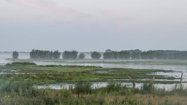 Early rise in the wetlands - Free image #466901