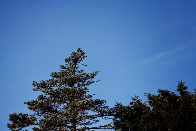 Tree tops and blue sky - image #467621 gratis