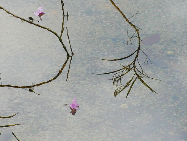 reflection of dragonfly (but not the flowers) - image #467671 gratis