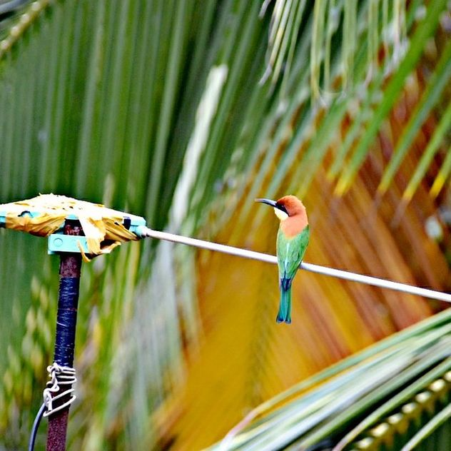 The Beeeater - image #467781 gratis