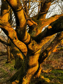 Gentleshaw Common, Burntwood, England - Free image #469541