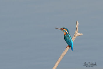 A Common Kingfisher in the lake - image #479751 gratis